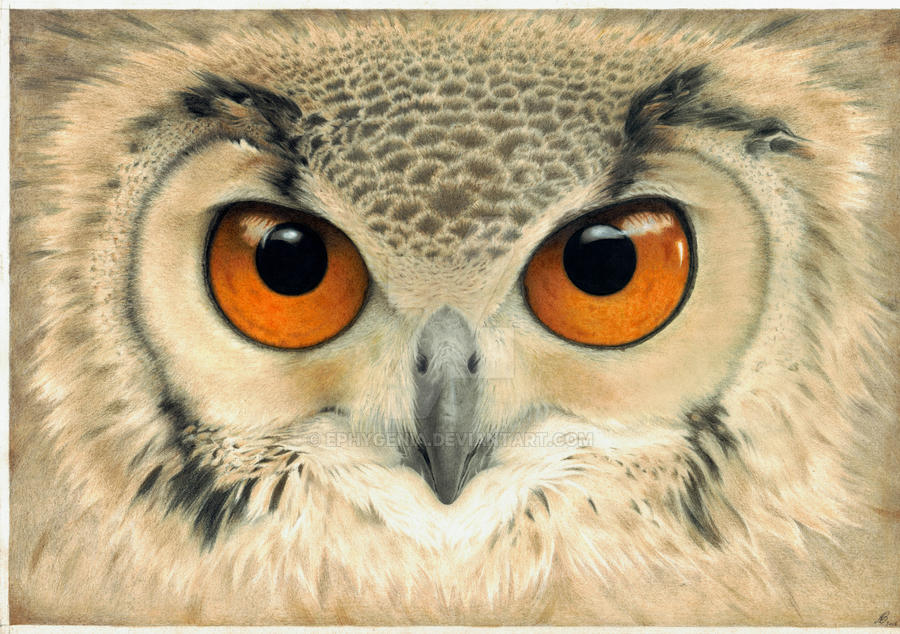Bubo bubo by EpHyGeNiA