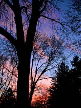 Veins of a Sunset