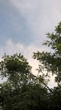 Tashkent clouds