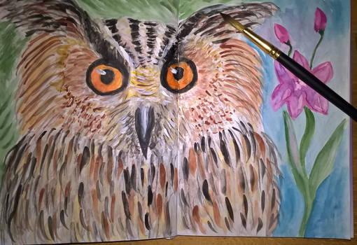 Owl - sketching