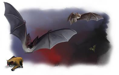 ABOREA Monster Bats