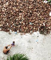 Coconut Field by rawkchiq