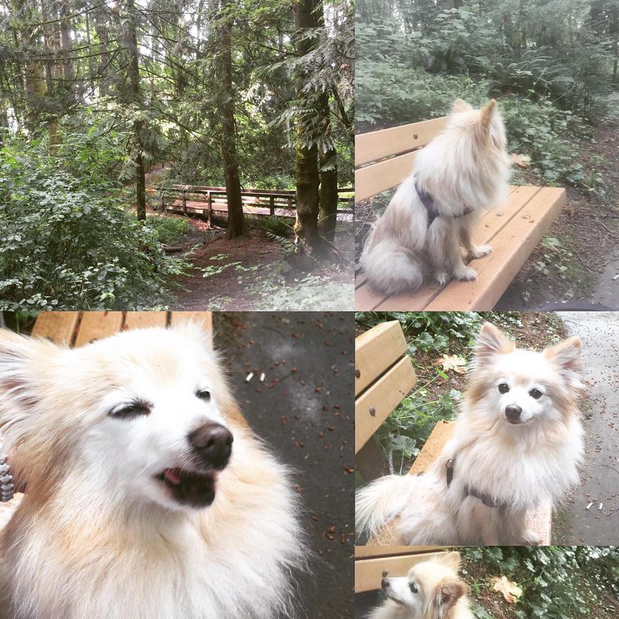 doggy walk by ivoryfawna