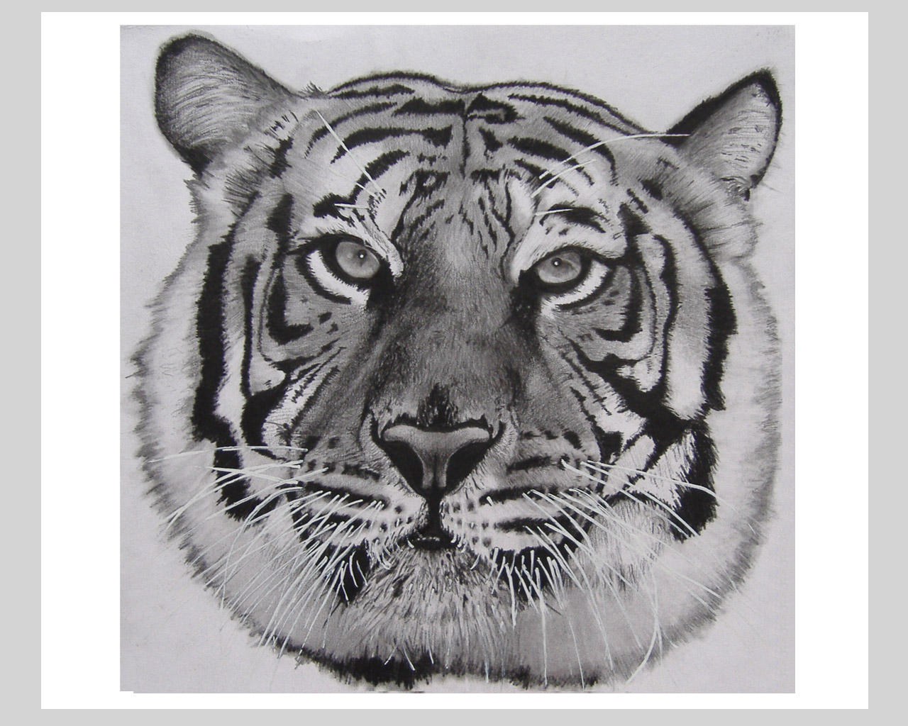 how to draw a realistic tiger face in pencil