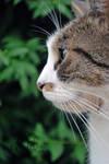 Cat #0639