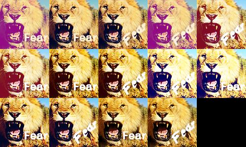 Lion Icons by sebi999