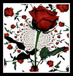 1000 Roses by Cresenta-Lark