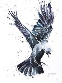 Bird in Motion Watercolor