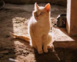 Angel Cat by zannen-na