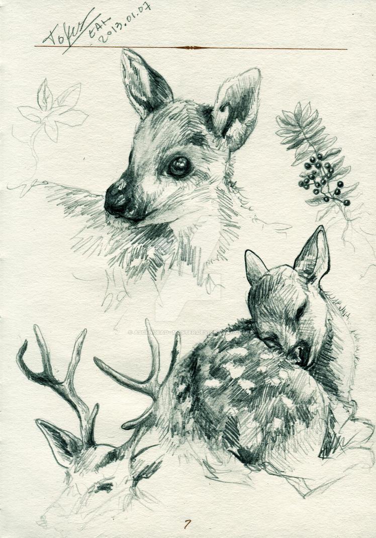 Tumblr Deer Drawing | www.pixshark.com - Images Galleries