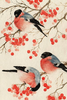 Bullfinches arrived.