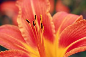 Earth laughs in flowers by AkuZeku