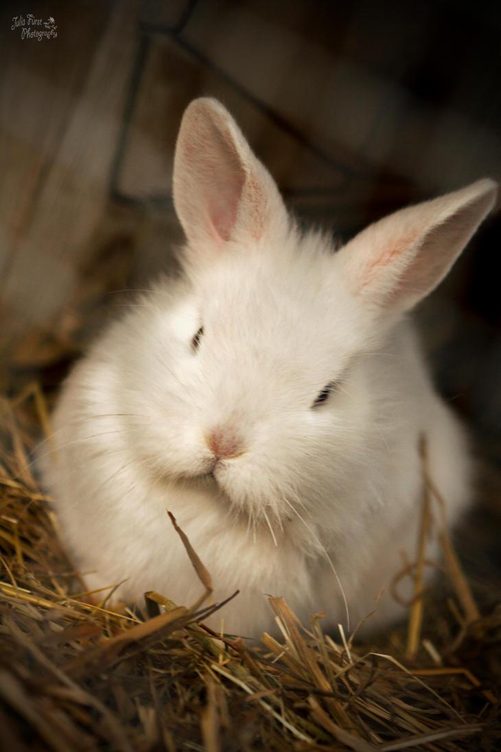 Kaninchen by AkuZeku