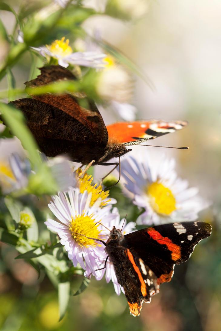 Butterflies are self-propelled flowers by AkuZeku