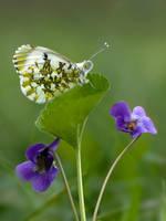 Everyone loves violets .... by dralik