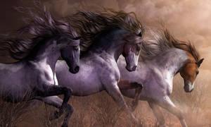 Oasis-Horses