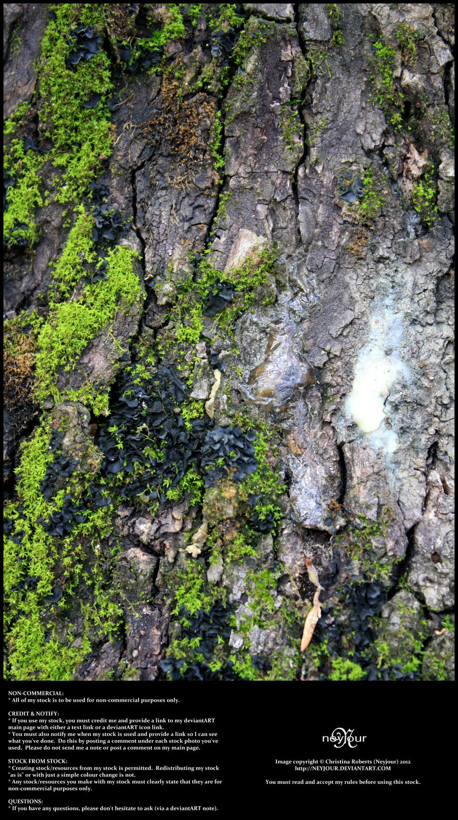 Mossy Bark 05 by Neyjour