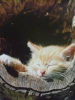 Eine Katze by sponqi08