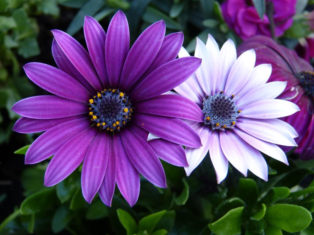Lila Blumen by sponqi08