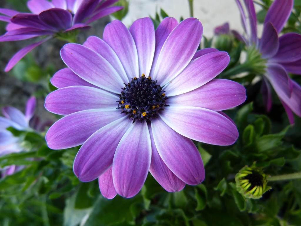 Lila Blume by sponqi08