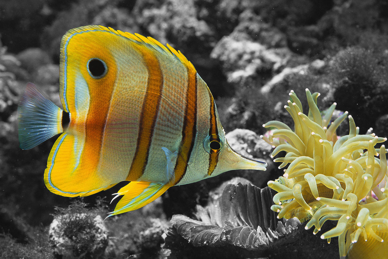 A color fish in b w world by minikozy92 on deviantart for What color are fish
