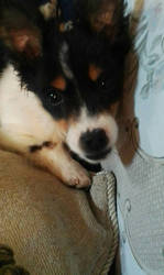 Iris - My new doggo!