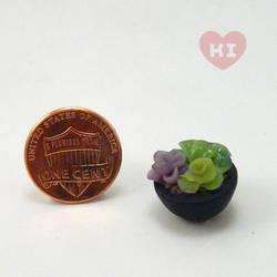 Miniature Potted Succulent 4