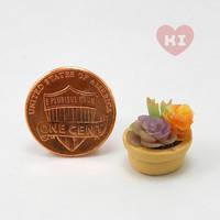 Miniature Potted Succulent 5