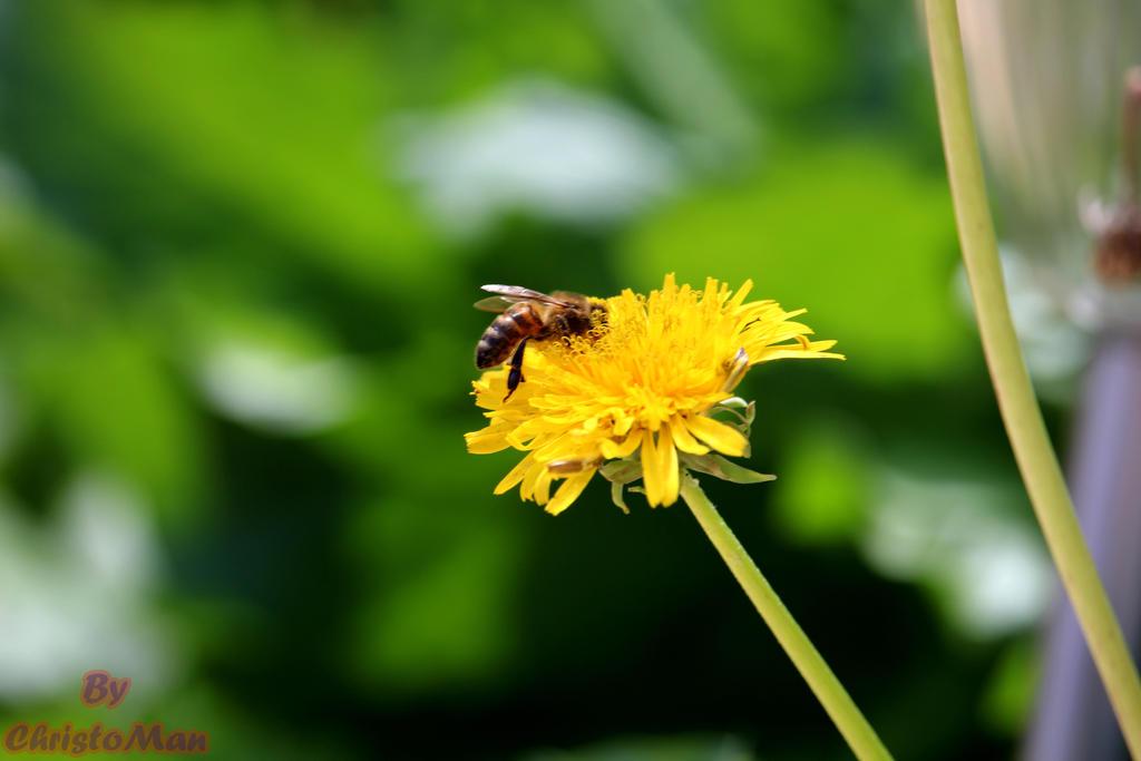 Flower power by ChristoMan
