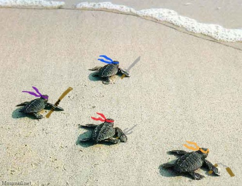 baby ninja turtles by tehagosonreir on DeviantArt