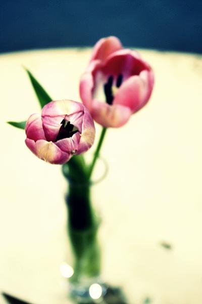 flower tells it all .1 by Laa1912