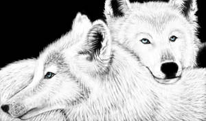 white wolves by Lulana