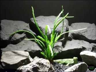 Succulent | Ron Beck Designs by ronbeckdesigns