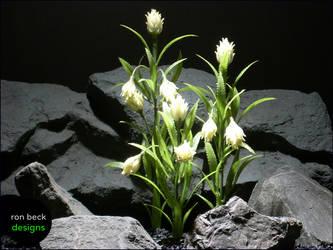 Protea White Plot | ron beck designs by ronbeckdesigns