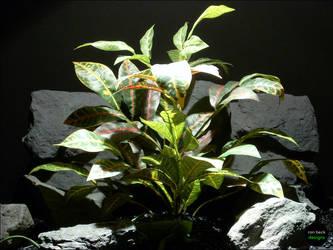 Reptile Habitat Plants: Croton Leaves Bush by ronbeckdesigns