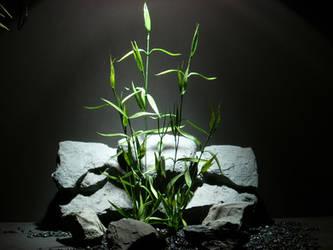 plastic aquarium plants: bamboo plot by ronbeckdesigns