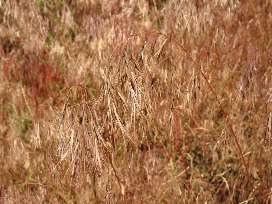 job speed dating hameln ornamental grass