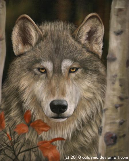 through the wild eyes by Calaymo