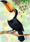 Toucan Guy Postcard by AndromedasWitchery