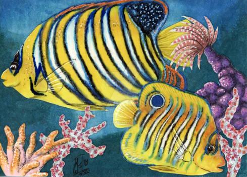 Angelfishes ATC