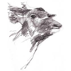 Antilope by humya
