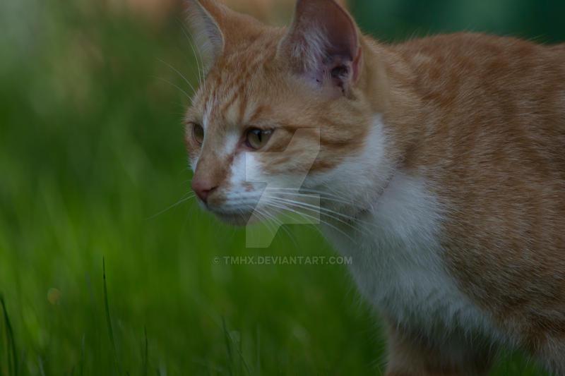 Cat in grass (: