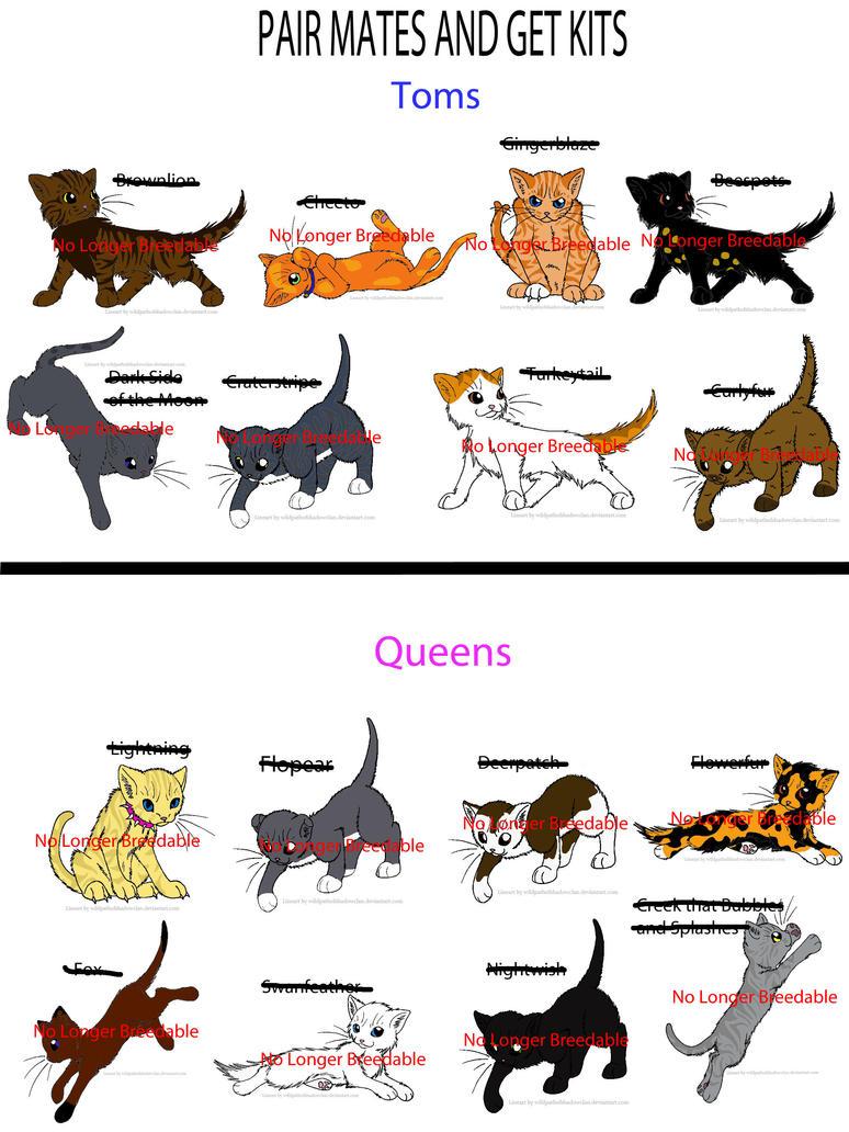 Cat Pair Names