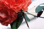 Dragonfly and Roses