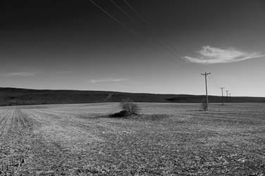 Barren Field by Arzosoth