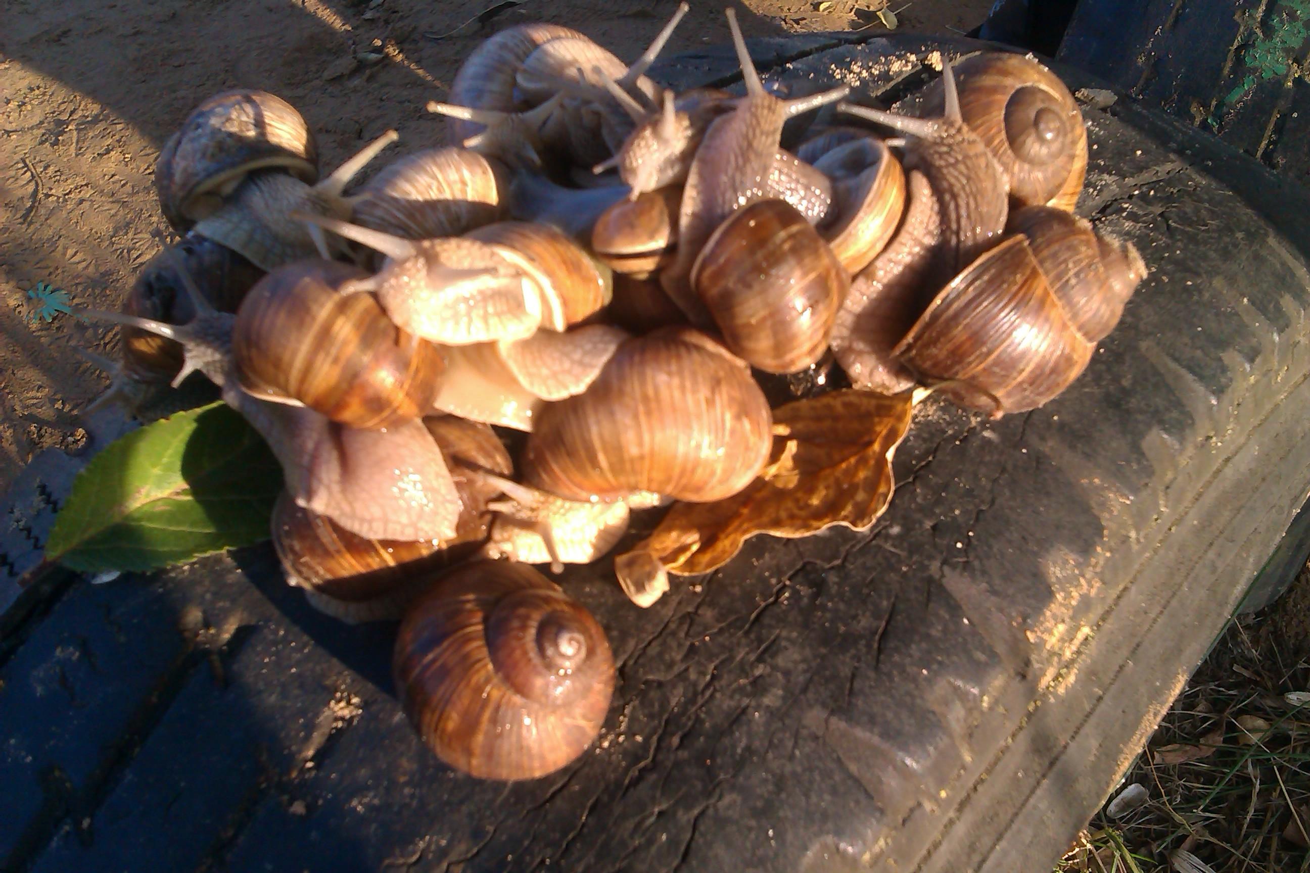Snail invasion by konu...