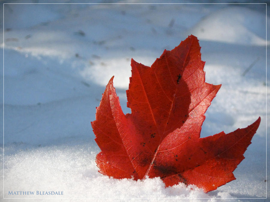 I AM CANADIAN  by Bleezer  I Am Canadian Wallpaper