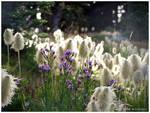 Alpine Flowers 1.