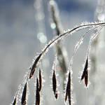 Square of Winter I