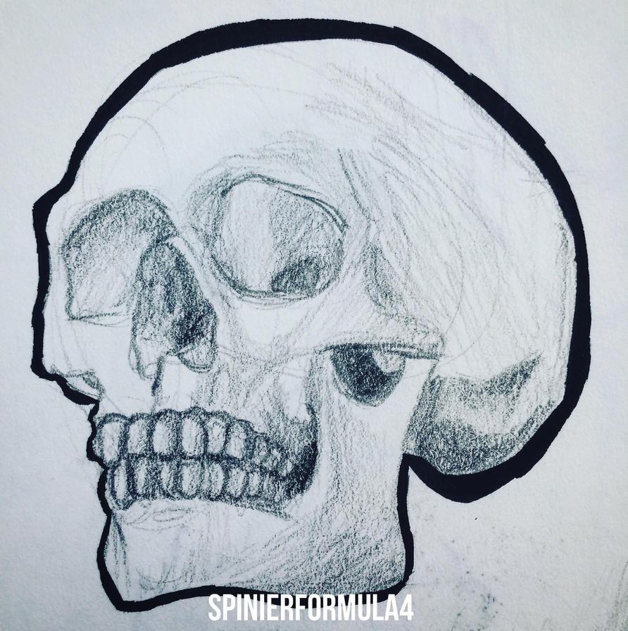 Skull Study 1 by SpinierFormula4